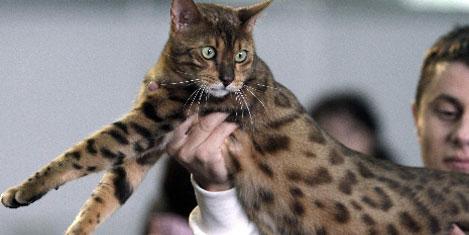 Dünyanın 'en kedileri' toplandı