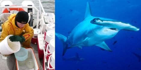 Dünya denizlerindeki canlı sayımı