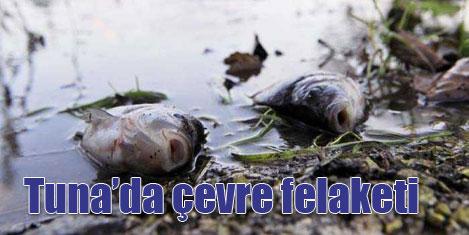 Tuna Nehri'nde balık ölümleri