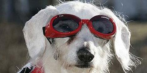 Dünyanın en yaşlı köpeği