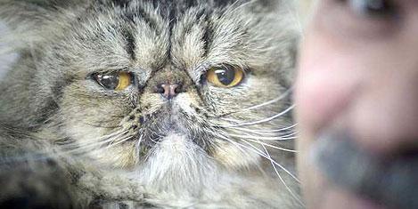 İsrail'de en güzel kedi seçiliyor