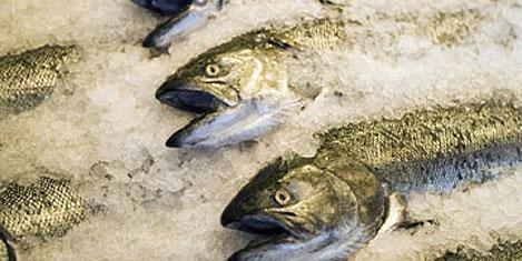 Rusya'ya balık ihracatı 22 kat arttı