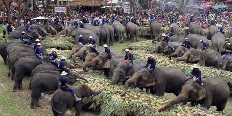 Filler için ziyafet sofrası kuruldu
