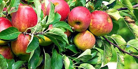 Meyve ve sebzeye lezzet geliyor