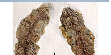 120 milyon yıllık kertenkele fosili
