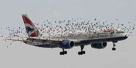 Uçakların belalısı kuşlar araştırıldı