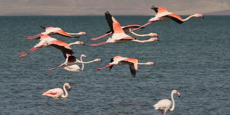 Flamingo Festivali başlıyor.