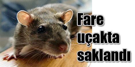 Saklanan fare uçuşu iptal ettirdi