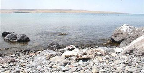 Turizm cennetinde kuş ölümleri