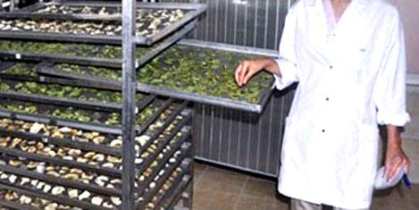 Jeotermal enerjiden ihracata katkı
