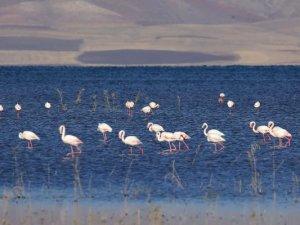 Erçek Gölü kıyısında bu yıl 8'inci Flamingo Festivali yapıldı