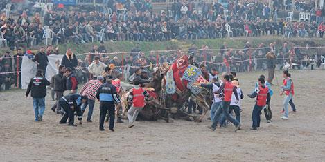160 deve kıran kırana güreşti