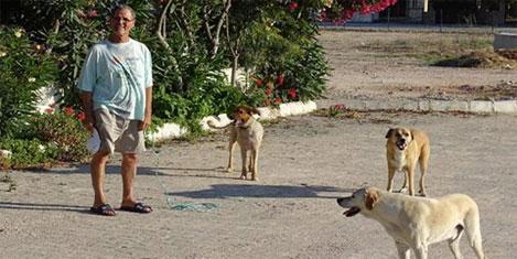 Çeşme'de sokak köpekleri sorunu