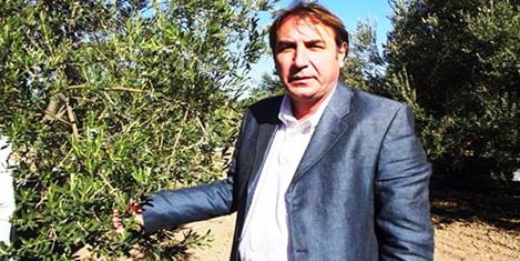 Türkiye'nin zeytin tarihi yok ediliyor