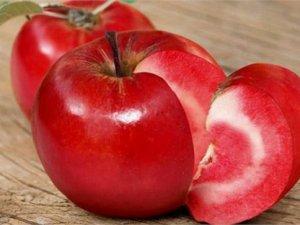 Posof'un içi de dışı da kırmızı olan elması tescil ediliyor