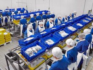 Balık deviAgromey, bağlıüç şirketi için konkordato istedi