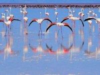 Kırmızı Flamingo'ları uğrak yeri,Tuz Gölü cenneti kuruyor