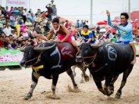 Taylandlı çiftçiler ekim sezonuna manda yarışı ile merhaba dedi