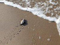 İndigo Turtles projesi deniz kaplumbağalarını koruyor