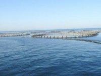 Kültür balıkçılığı ihracatı 800 milyon dolar