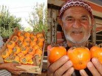 Turistlerin 'gençlik' keşfi Trabzon hurmasına talebi artırdı