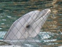 TripAdvisor, yunus ve balinaları hapsedentesislere bilet satmayacak