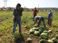 Antalya 'Kardeş Olalım Projesi'yle tarım birikimini başka illere taşıyor