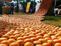 Türkiye, narenciye ihracat fiyatını nasıl artırabilir?