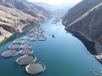 Elazığ'da üretilen alabalık 18 ton, somon 1000 ton oldu