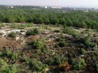 Mersin'de binlerce kızılçam ağacı kesildi