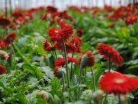 Dünya Kadınlar Günü,çiçekçilere 10 milyon Dolar kazandırdı