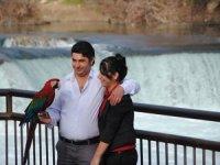 Turistlerle hatıra çektiren papağanlarda Covid-19 stresi