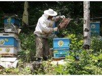 OGM Genel Müdürü: 56 'bal ormanı' kurulmasını hedefliyoruz