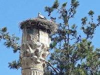 Leylekler Jüpiter Tapınağı'nda ki 50 yıllık yuvalarına döndü