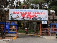 Antalya Hayvan Bahçesi'nde 6 farklı türden 16 sevimli dost