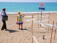 Caretta Carettaların yumurta bırakma alanları koruma altında