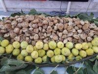 Ege inciri ve sultani üzümü ABD'de hibrit ile tanıtılıyor