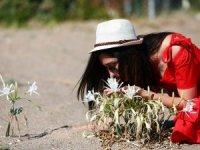 Antalya'da Kum zambaklarını koparana 73 lira ceza