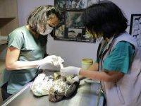 243 Yaban hayvanı tedavi edilip doğaya bırakıldı