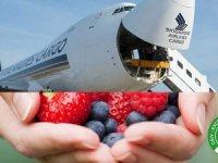 Singapur Hava Yolları IATA'nın küresel sertifikasını aldı