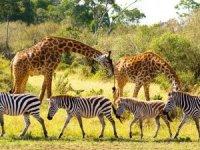 TikTok, Afrika'daki yaban hayatın korunmasına dikkat çekiyor
