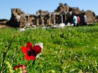 5 antik kentte yetişen 5 endemik bitki korumaya alındı