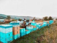 Çiçeklere konan Afrika'nın toz bulutu arıcıları vurdu