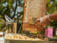 Kocademir: Çam kese Böceği bal ormanlarını tehdit ediyor