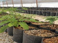 Aromatik bitkiler çiftçiye belediye tarafından hibe edildi