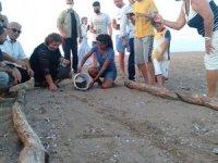 Manavgat'ta yumurtadan çıkan caretta carettalar denizle buluştu