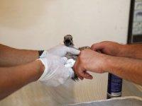Yangından etkilenen 941 hayvanın tedavisi yapıldı
