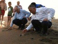 Manavgat'ta yavru kaplumbağalar vali eliyle denize ulaştı