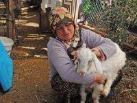 Kıl keçileri kesime gidince , ormanlar korunaksız hale geldi!