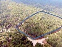 Kültür ve Turizm Bakanlığı bazı ormanlık alanları turizme açmış